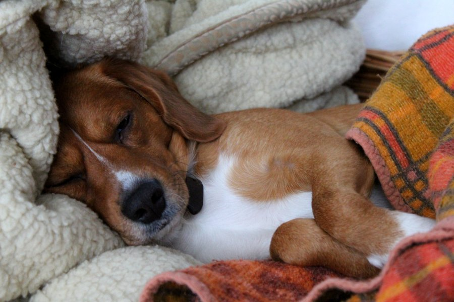 sleepy dog4