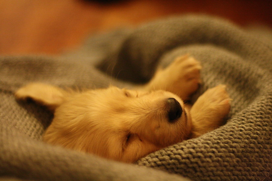 sleepy dog5