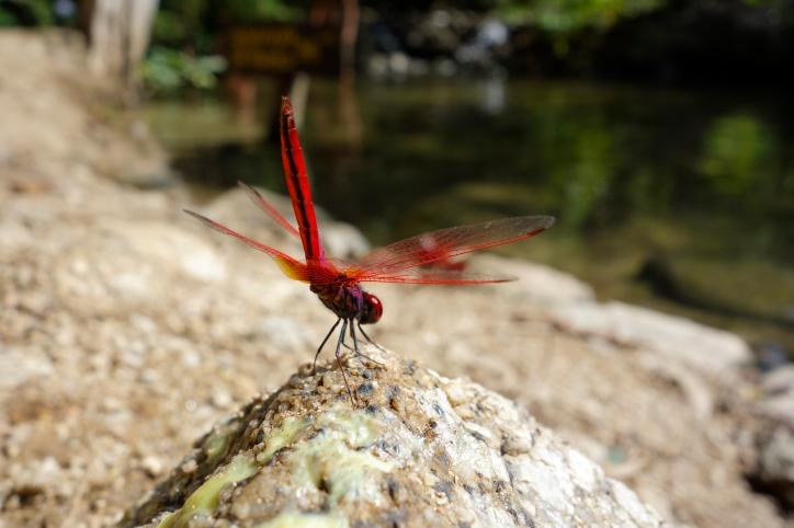 Dragonfly4