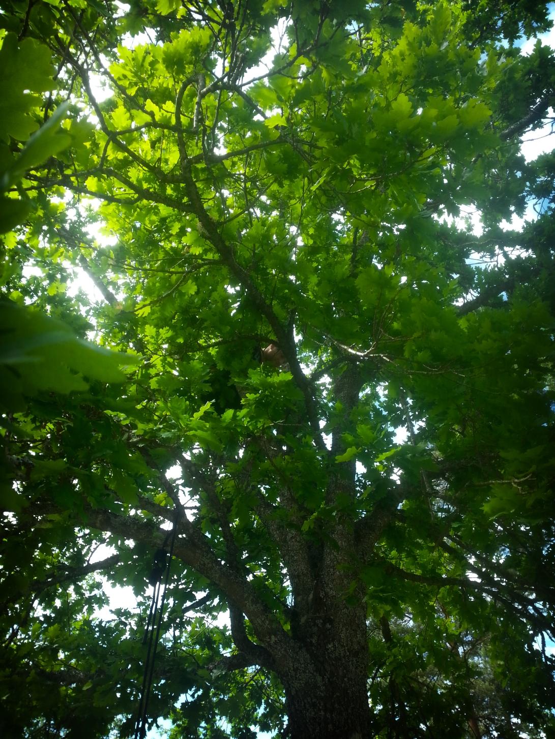 TreeClimber